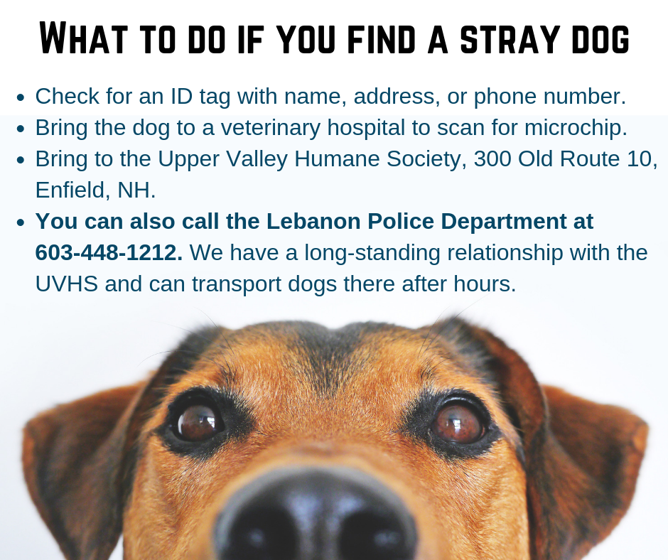 What to do if you find a stray dog