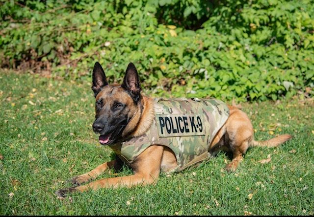 K9 Blesk in new body armor vest